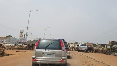 Photo of Cattle posing danger to road users in Tema