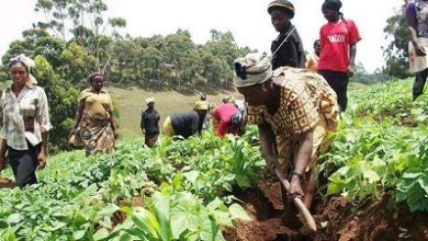 Photo of EU implements agribusiness project in Nkoranza North District