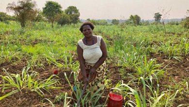 Photo of Agro Master launches fertiliser credit scheme