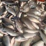 ?Government urged to enforce fishing by-laws