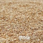 Buyers exploit local rice farmers in the North