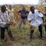 ?Small-scale farmers advised to ?sell their produce to GCX