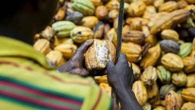 Photo of COCOA CONSUMPTION- BEYOND THE NATIONAL CHOCOLATE DAY