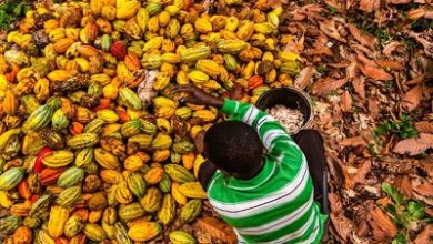 Photo of Let's promote export of cocoa products under AfCFTA – AGI