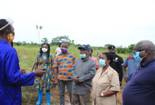 Photo of Mineral C'ssion to provide free fertiliser for farmers in oil palm plantation—S.K. Boafo