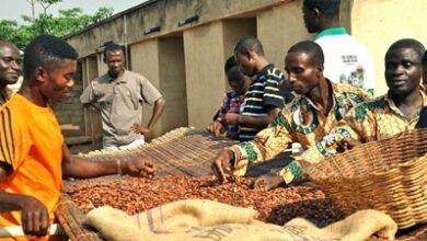 Photo of INSURANCE FOR COCOA FARMERS – AN IDEA WHOSE TIME HAS COME